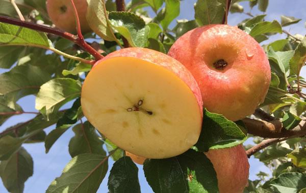 在农村卖苹果草莓蜂蜜等特产的电商怎么做?用这4个方法让你销量猛增